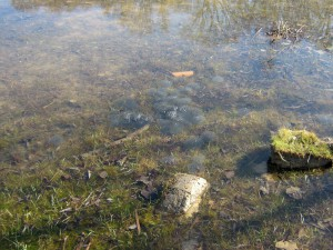Bild7-Lanstroperstrasse-Grasfroschlaich