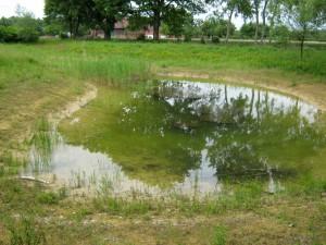 Bild9-Lanstroperstrasse-Wasserpflanzen